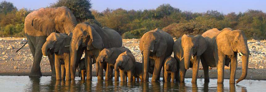 Elephants à Etosha Namibie Samsara Voyages