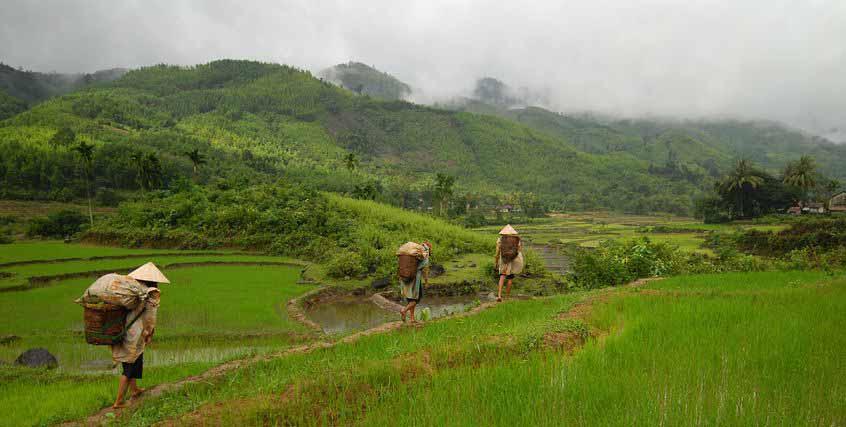 H'Mongs dans les montagnes au Vietnam
