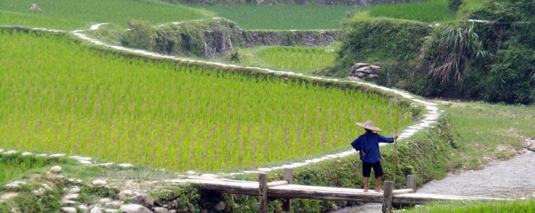 Les rizieres dans le pays Miao, circuit en Chine