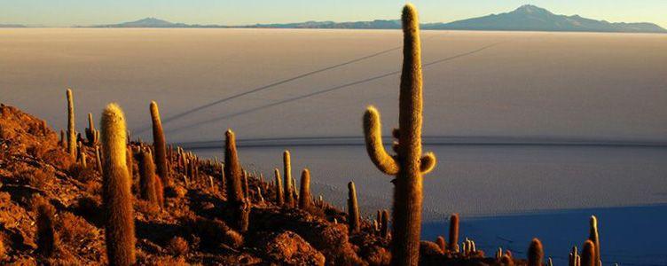 Uyuni Samsara séjour Chili Bolivie