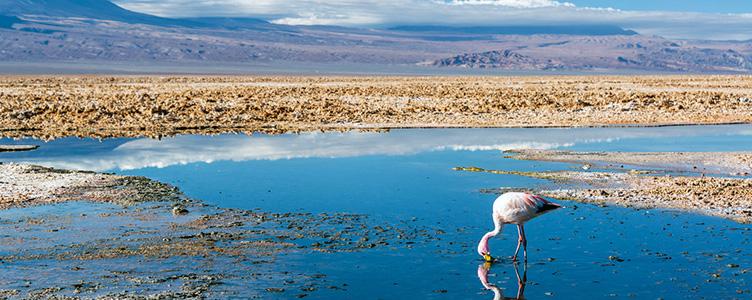 Séjour Chili Bolivie Chaxa flamand rose lac