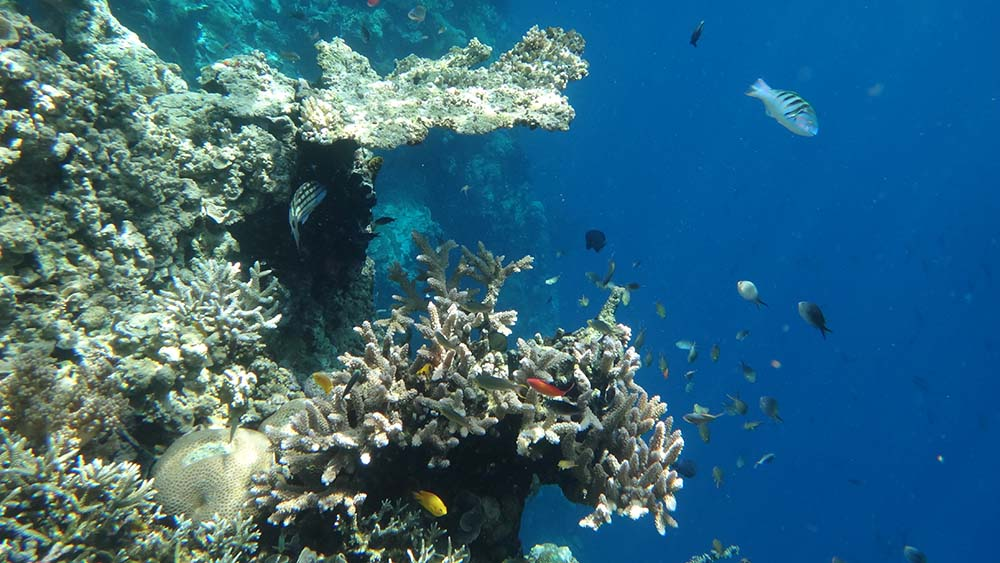Snorkeling Bali circuit samsara
