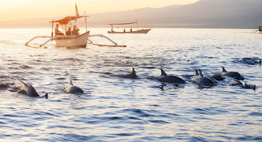 Dauphins à Lovina en Indonésie Bali, voyage Samsara