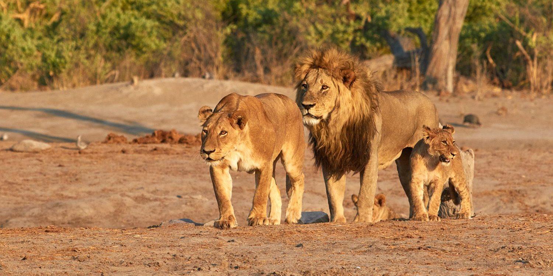 En safari au Botswana avec Samsara