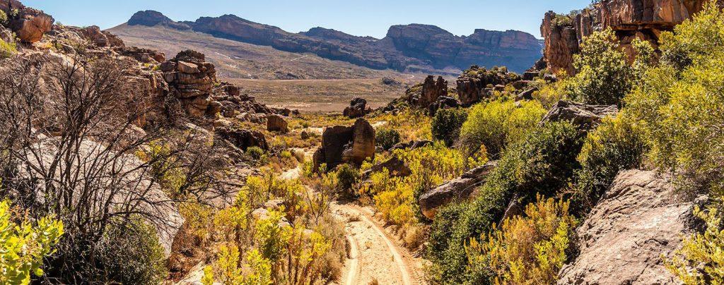 Dnas le Cederberg, Afrique du Sud
