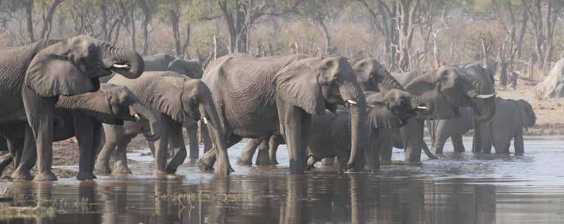 Circuit Botswana Moremi troupeau éléphant boire