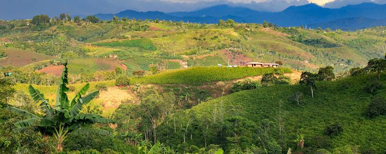 Colombie plantations de café Samsara Voyages