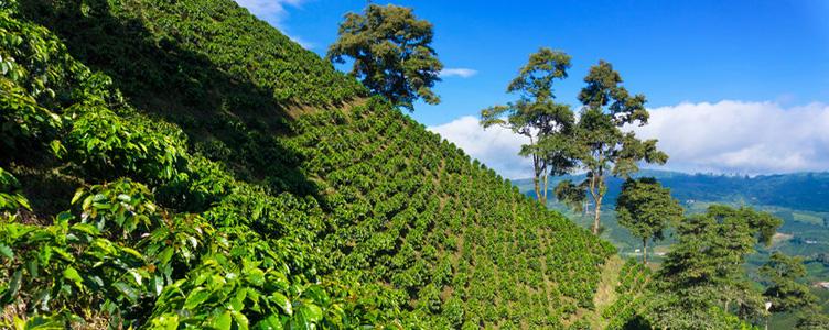 Colombie culture agricole Voyage Manizales Samsara