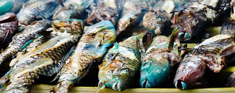 Poisson grillé pêche locale Colombie Samsara Voyages