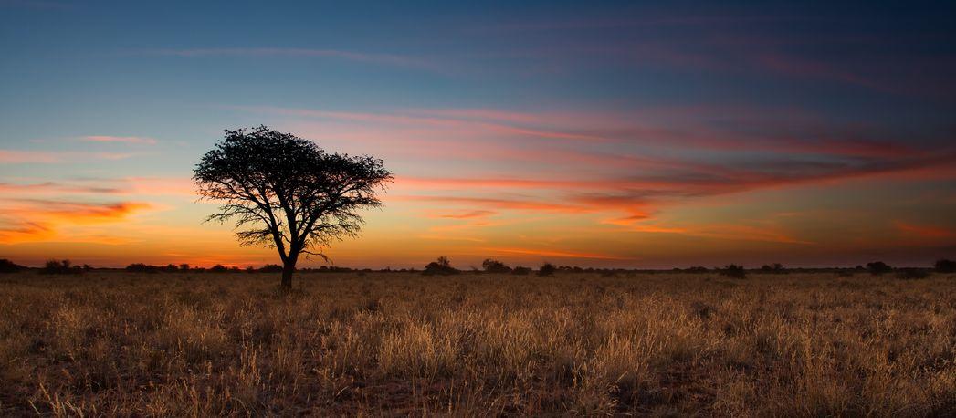 Coucher de soleil sur le Kalahari au Botswana