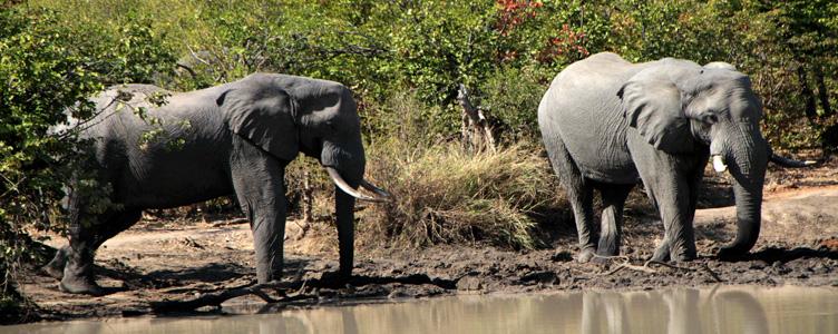 Samsara Voyages éléphants Hwange