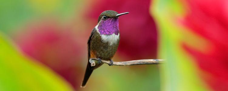 Samsara Voyages oiseau medellin