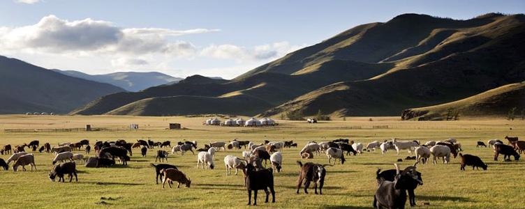 Troupeau de chevaux Mongolie Vallée Orkhon Samsara Voyages