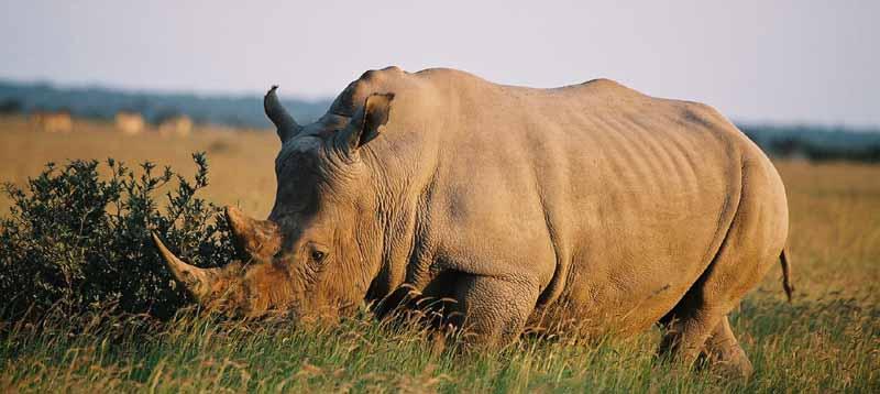 Circuit Botswana rhinocéros Samsara