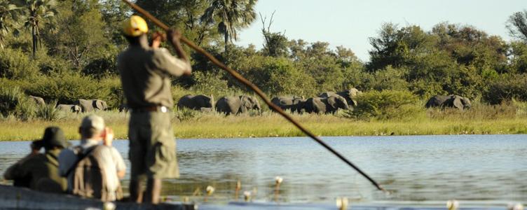 Rivière safari Botswana éléphants libres