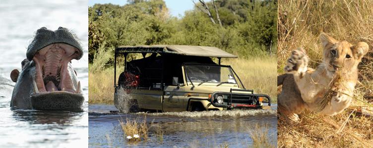 Safari Namibie lions hippopotame lions savane