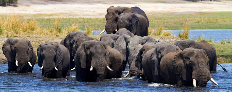 Samsara éléphant voyage Afrique