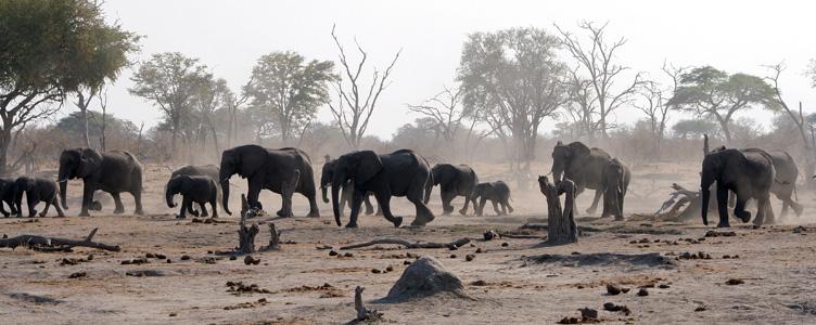 Samsara voyage aventure Botswana troupeau éléphants