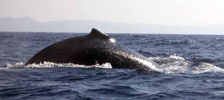 Samsara Voyages Afrique du sud baleines