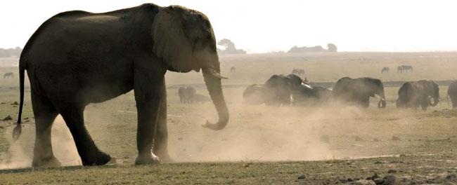 Troupeau éléphant savane Samsara voyages