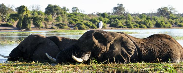 Voyage safari Chobe Samsara Voyages éléphants