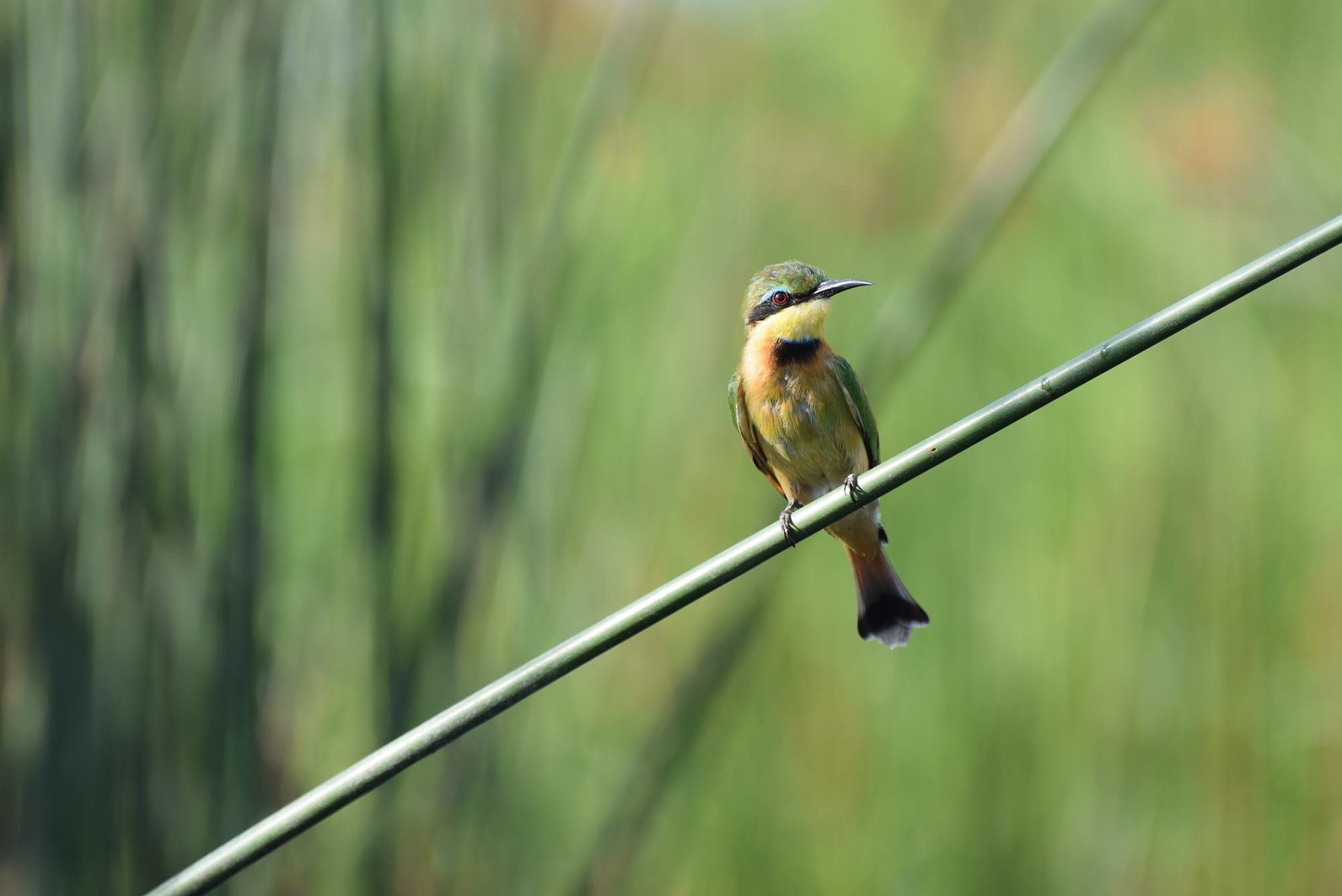 Observation des oiseaux lors d'un safari au Botswana