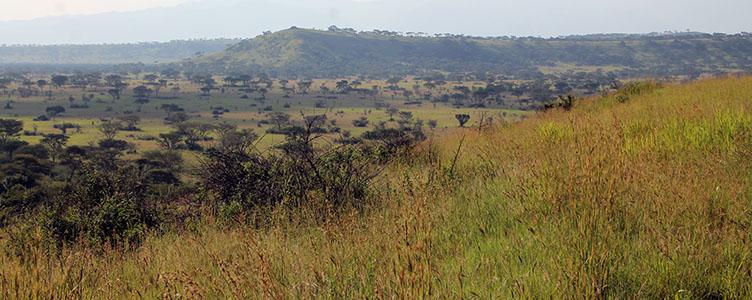Visite du Parc Queen Elisabeth en Circuit en Ouganda