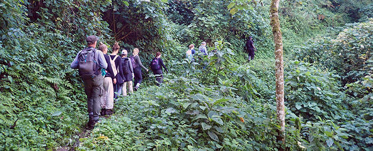 Une randonnée en Ouganda à la rencontre des Gorilles, circuit Samsara
