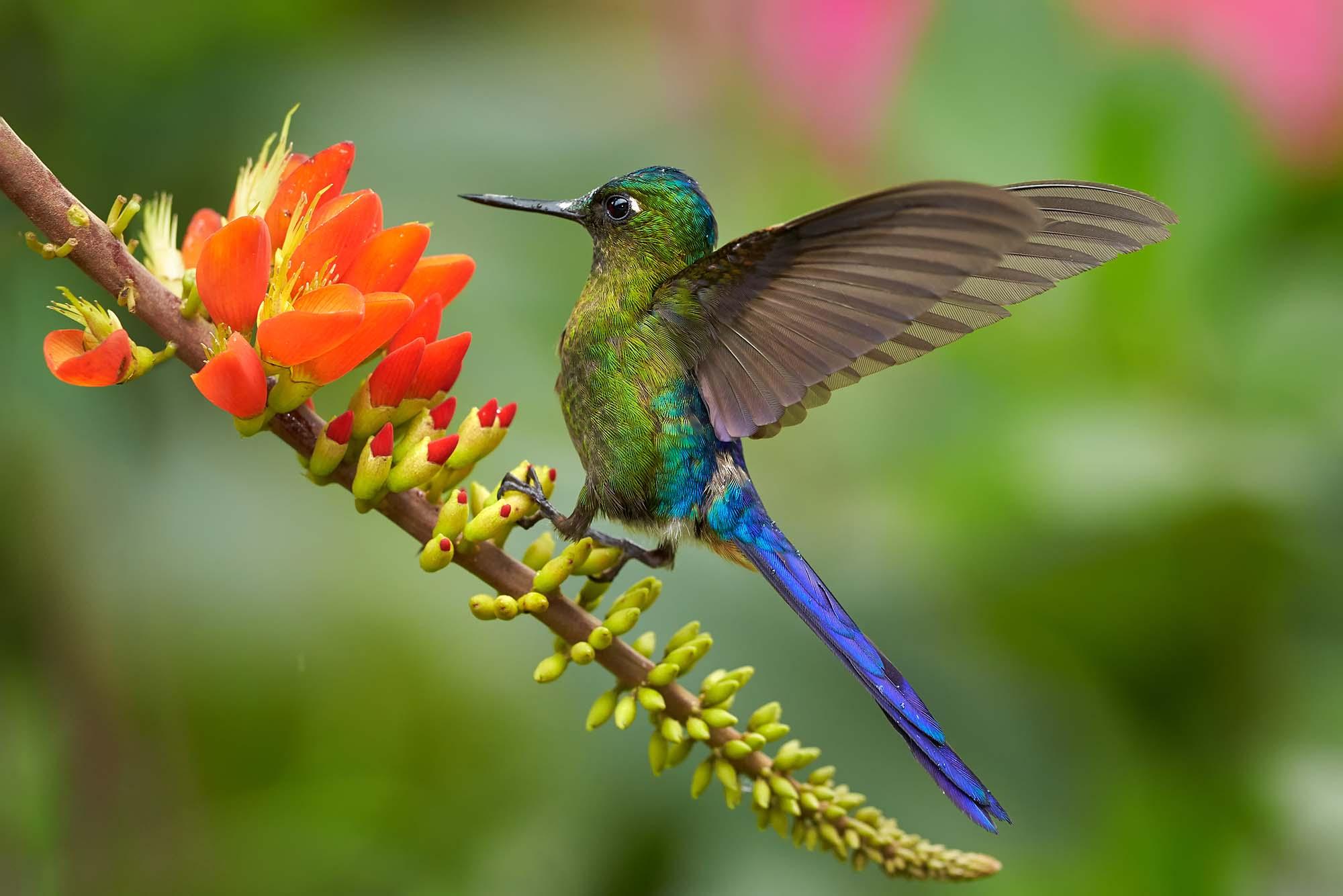 A la découverte de la faune lors d'un circuit en Colombie