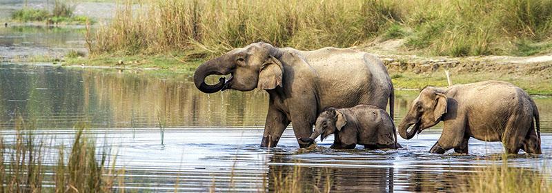 En safari à Chitwan avec Samsara Voyages
